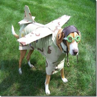 dog-in-pilot-costume