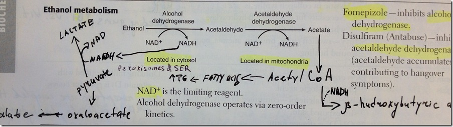 alc metabolism